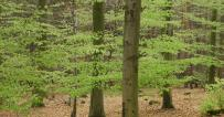 Jessica Weller: Landesregierung muss klimaresistenten Waldbau als Jahrhundertaufgabe begreifen