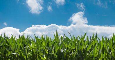 Horst Gies: Die neue GAP ist ein Meilenstein für Landwirte und Umwelt