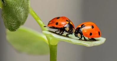 Horst Gies / Johannes Zehfuß: Insekten schützen und regionale Wertschöpfung sichern
